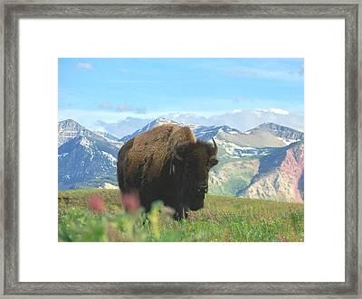 Where The Buffalo Roam Framed Print