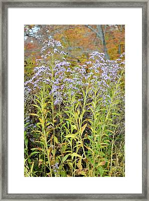 Framed Print featuring the photograph Whimsy by Deborah  Crew-Johnson