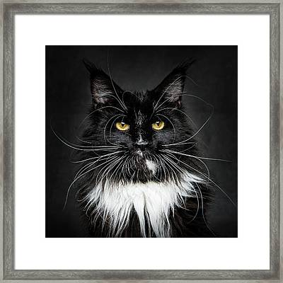 Framed Print featuring the photograph Whiskers  by Robert Sijka