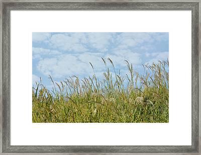 Whispers Of Summer Framed Print by Fraida Gutovich