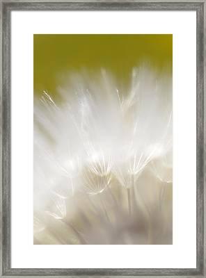 White Blossom 1 Framed Print