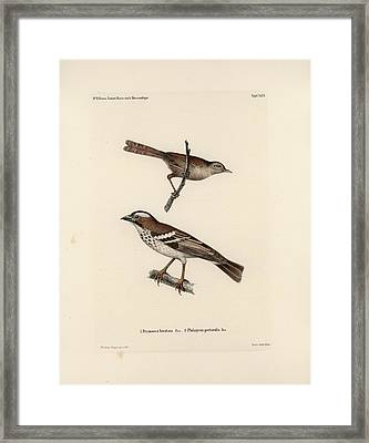White-browed Sparrow-weaver And Grass Or Bush Warbler Framed Print