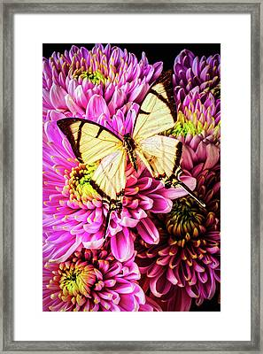 White Butterfly On Mums Framed Print