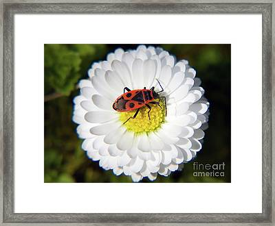 Framed Print featuring the photograph White Flower by Elvira Ladocki