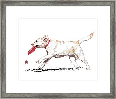White Frisbee Dog Framed Print
