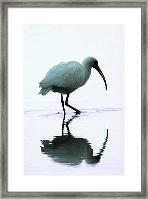 White Ibis Framed Print by Jerry Weinstein