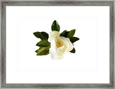 White Magnolia Flower And Leaves Isolated On White  Framed Print