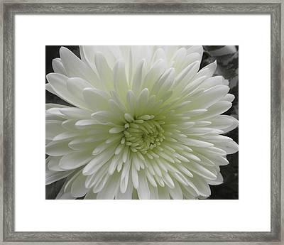 White Mumm Framed Print by Michele Caporaso