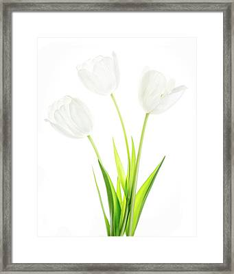 Framed Print featuring the photograph White On White by Rebecca Cozart