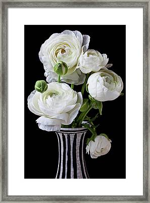 White Ranunculus In Black And White Vase Framed Print by Garry Gay