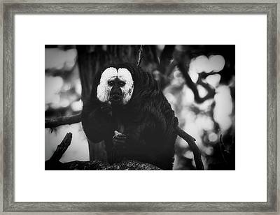 Framed Print featuring the photograph White Saki by The 3 Cats