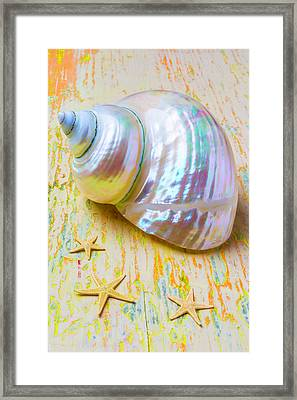 White Shell And Starfish Framed Print by Garry Gay