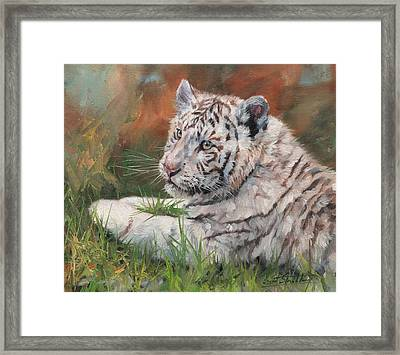 White Tiger Cub Framed Print by David Stribbling