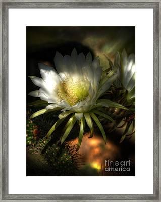 White Torch Cactus Flowers  Framed Print by Saija  Lehtonen