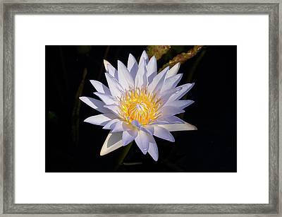 Framed Print featuring the photograph White Water Lily by Steve Stuller