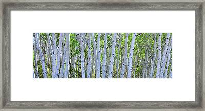 White Wilderness Panorama Framed Print by James BO Insogna