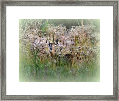 Whitetail Deer In Winter Dreamscape Framed Print