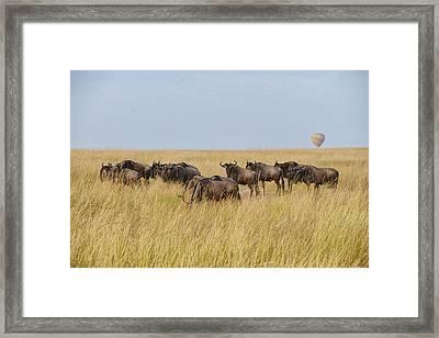 Wild Beasts Framed Print