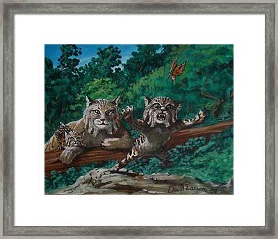 Wild Bob Framed Print by David  Larcom