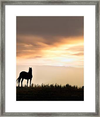 Wild Horse Sunset Framed Print by Leland D Howard