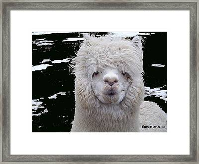 Wild Life Framed Print by Robert Orinski