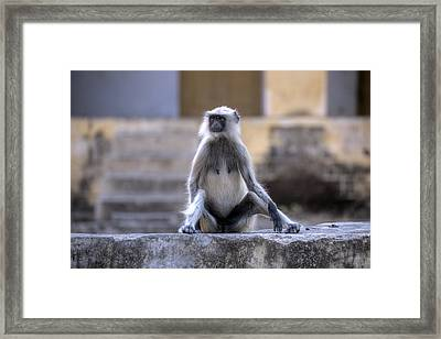 wild monkey in Rajasthan - India Framed Print by Joana Kruse
