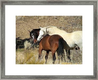 Wild Mustang Horses Framed Print