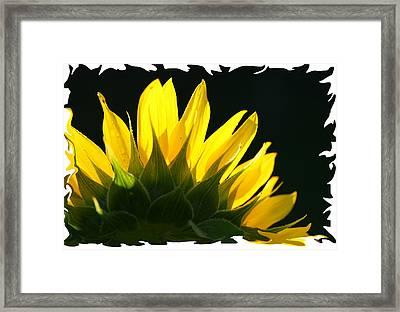 Framed Print featuring the photograph Wild Sunflower by Shari Jardina