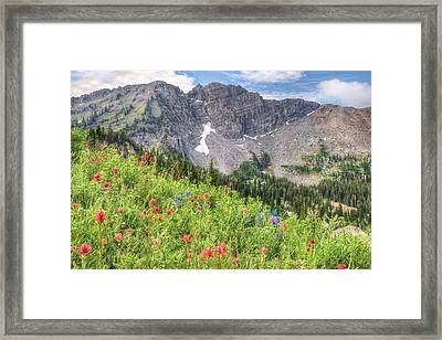 Wildflowers In Albion Basin Utah Framed Print