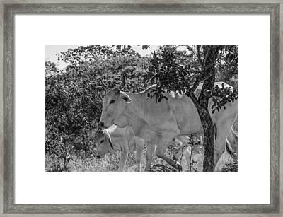 Wildlife Framed Print by Daniel Precht