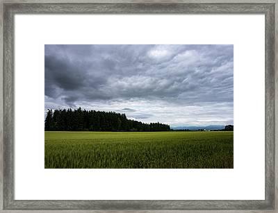 Willamette Wheat Framed Print