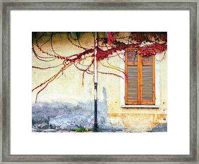Framed Print featuring the photograph Window And Red Vine by Silvia Ganora