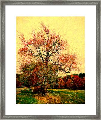 Windy Autumn Tree Framed Print