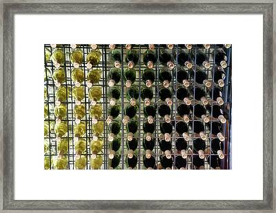 Wine Rack With Bottles Pa 03 Framed Print by Thomas Woolworth