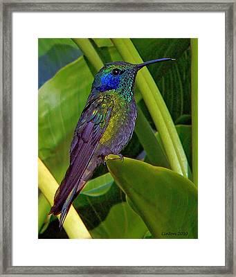 Winged Jewel Framed Print