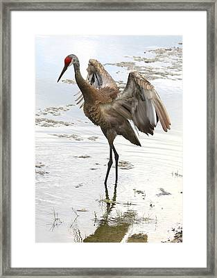 Winging It Framed Print