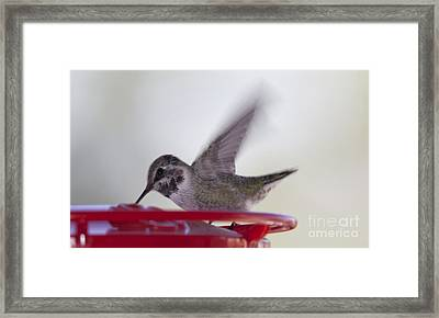 Framed Print featuring the photograph Wings In Motion 2 by Anne Rodkin