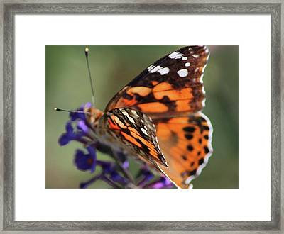 Wings Of Happiness Framed Print