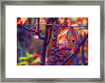 Winter Berries Framed Print by Doug Johnson