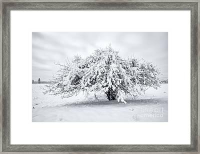 Winter Blanket Framed Print