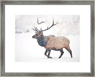 Winter Bull Framed Print by Mike Dawson