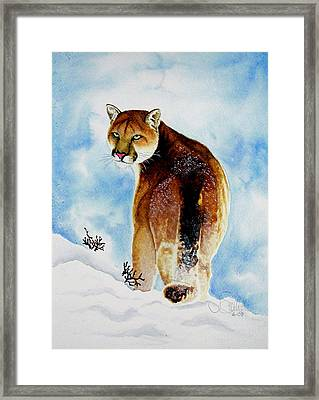 Winter Cougar Framed Print