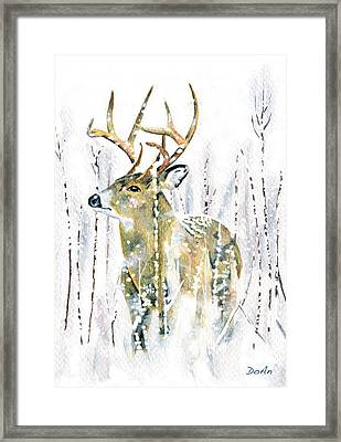 Winter Deer Framed Print by Antony Galbraith