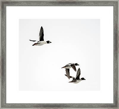 Winter Flight Framed Print by Mike Dawson