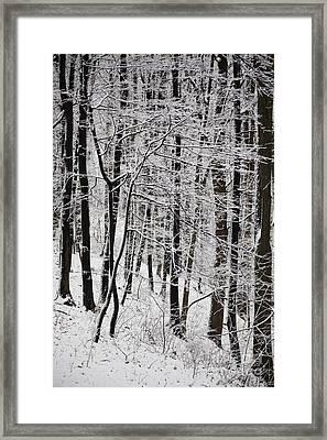 Winter Framed Print by Gabriela Insuratelu