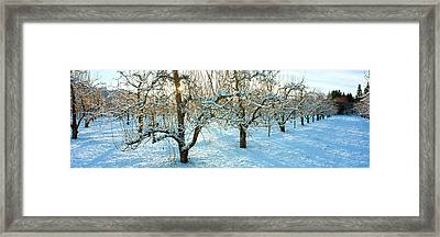 Winter Morning In The Pear Orchard Framed Print by Panoramic Images