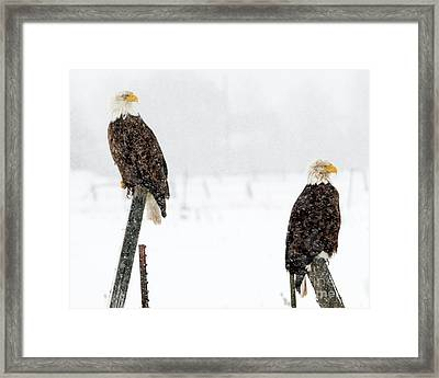 Winter Pair Framed Print by Mike Dawson