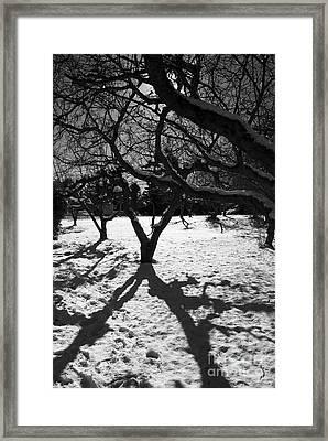 Framed Print featuring the photograph Winter Shadows by Yulia Kazansky