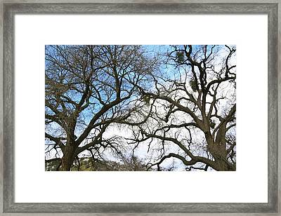 Framed Print featuring the photograph Winter Trees At Fort Tejon Lebec California  by Floyd Snyder