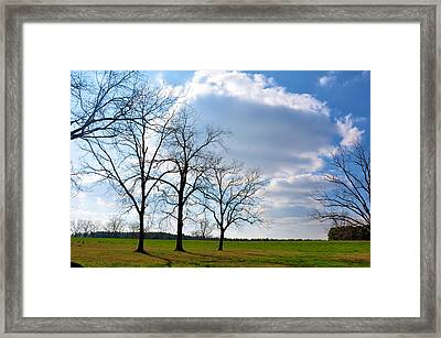 Winter Trees Framed Print by Jan Amiss Photography